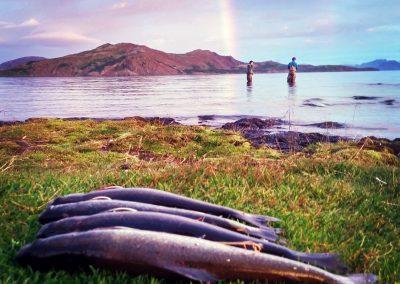 Fiskeri efter ørred i Island