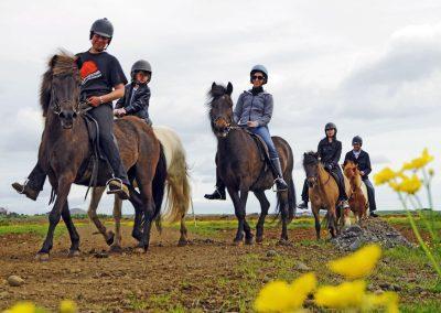 Vil du ride på islandske heste?