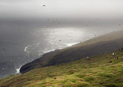 Millioner af fugle på Mykines med både suler og søpapegøjer og andre spændende havfugle.