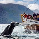 Husavik mod nord er et af de bedste områder for hvalafari. Her er der bl.a. mulighed for at se blåhvaler.