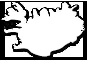 Se spækhugger og andre hvaler på hvalsafari fra Snæfellsnes-halvøen