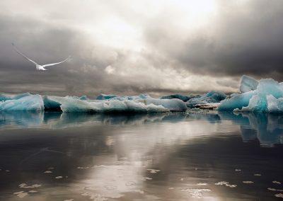Jökulsárlón gletsjerlagune med dramatiske farver og arktisk terne i luften :: foto: Lars Viberg - ISLANDSREJSER