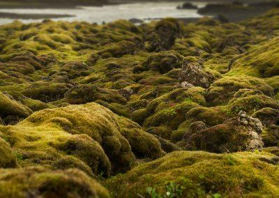 Smukke lavamarker med mos