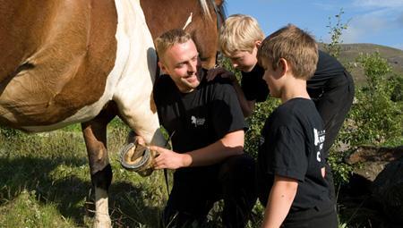 En dag på hestefarmen i Island med islandske heste - rejser til Island