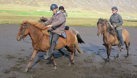 Storslåede rideture på islandske heste - aktiviteter i Island