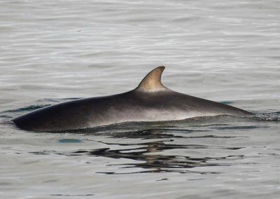 Ridetur og hvalsafari i Island