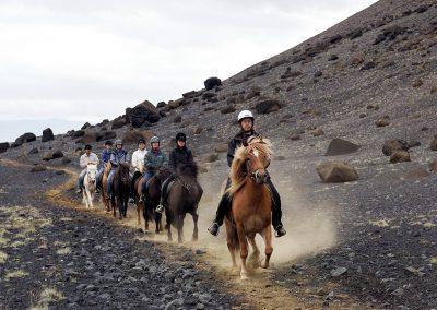 Rideture i Island på islandske heste tæt ved Reykjavik