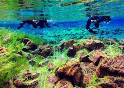 Snorkle ved Thingvellir og Silfra i Island på kør-selv ferie og bilferie med ISLANDSREJSER