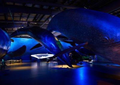 Hvaler i 1:1 størrelse kan opleves hos Whales of Iceland i Reykjavik :: foto: Lars Viberg - ISLANDSREJSER