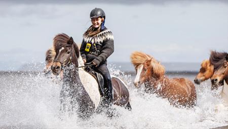 Rideture på Islandske hest i deres rette element. Der er masser af muligheder - også fra Reykjavik