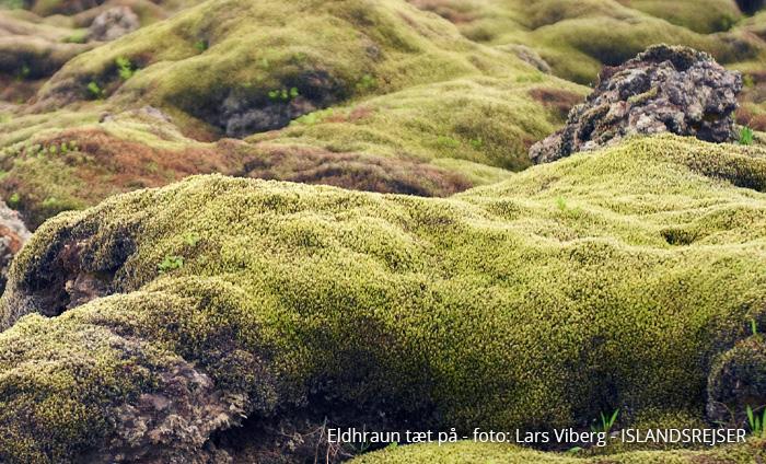 Vulkanerne i Island - Eldhraun lavamarker