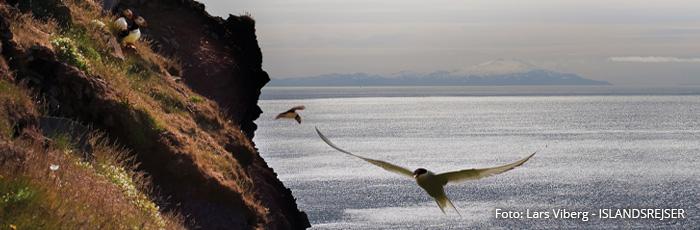 Vestfjordene i Island på kør-selv ferie med ISLANDSREJSER og rejser til Island