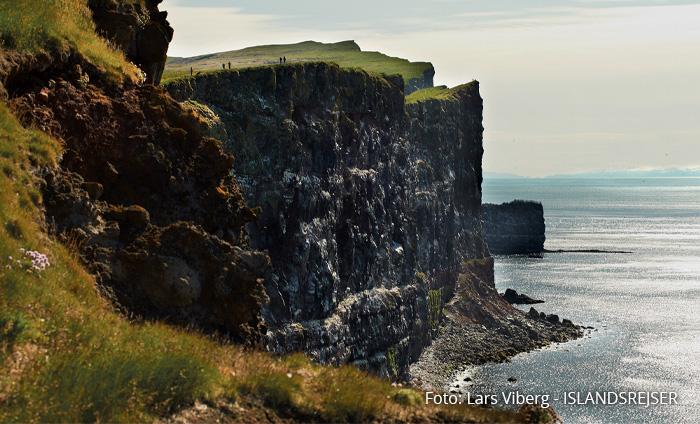 Latrabjarg Vestfjordene i Island på kør-selv ferie med ISLANDSREJSER og rejser til Island