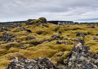 Mos på lavamarken på kør-selv ferie bilferie og grupperejser i Island med ISLANDSREJSER