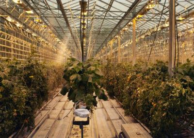 Aktiviteter og dagture i Island - Fridheimar café og geotermiske drivhuse