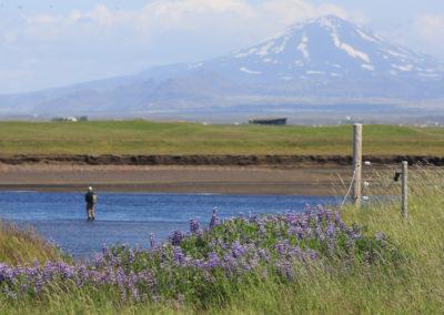 Laksefiskeri i Island med ISLANDSREJSER