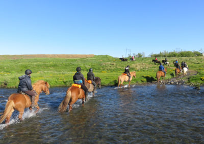 Ridetur på islandske heste og hvalsafari i Island